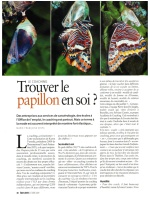 Le coaching : Trouver le papillon en soi ?